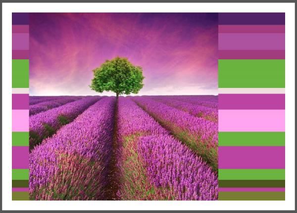 "Postkarte ""Lavendeltraum - Farbenspiel"" | Grußkarte, Lavendel"