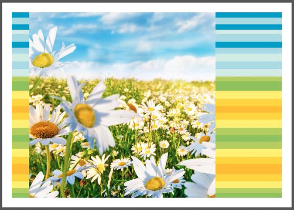 "Postkarte ""Margeritenblüte - Farbenspiel"" | Grußkarte, Blumen"